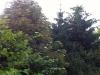 bushscape_k