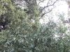 treescape_weide_k