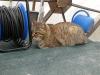 The radio cat