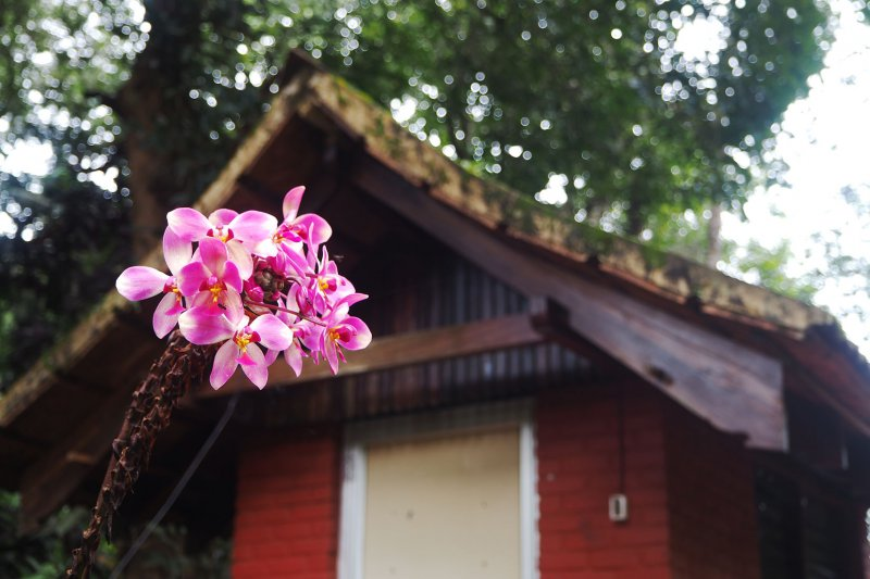 orchidhouse