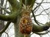 Ananas birdhouse