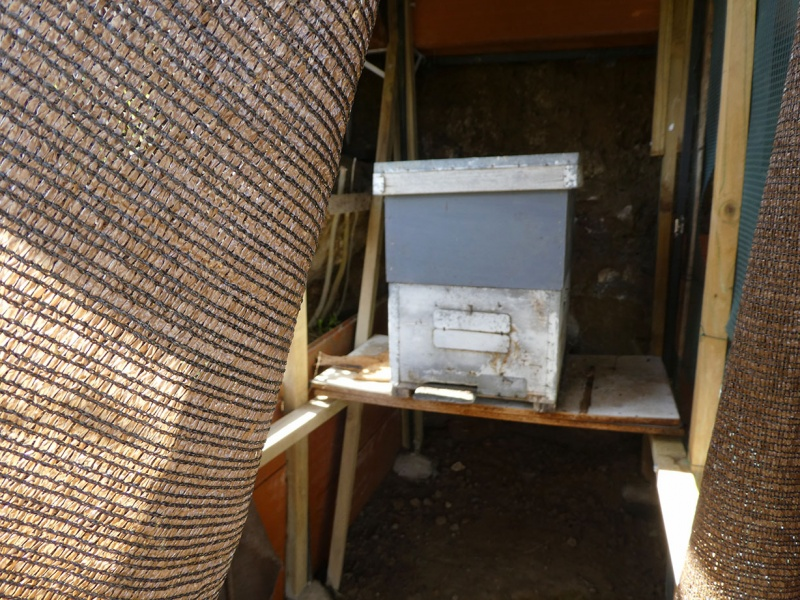The silent bee hive