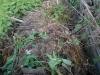 v_kompost