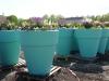 lgs_plantculture