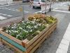 lgs_plantculture2