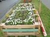 lgs_plantculture4