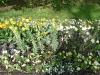 lgs_plantculture8