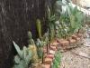 cactuspath