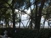 Shapely trees