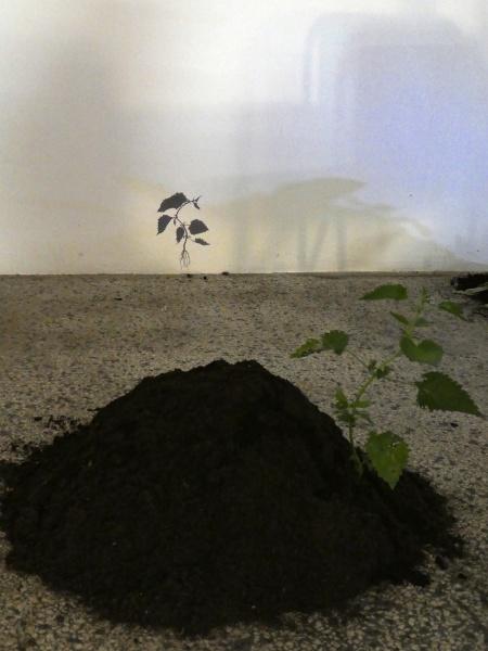 shadowplay nettle