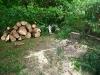 Tree gone 2