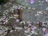 Slugs eating flowers
