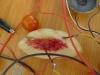 Electrified peach