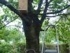 blog7_birdhouse