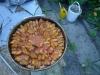 kitchen_plum