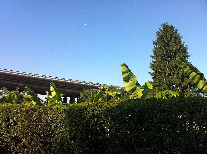 bananenhain_k