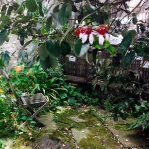View Roots&Shoots: paradise corner