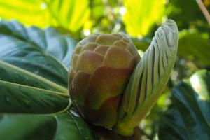 strange fruits 2