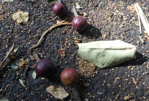 strange fruits 3