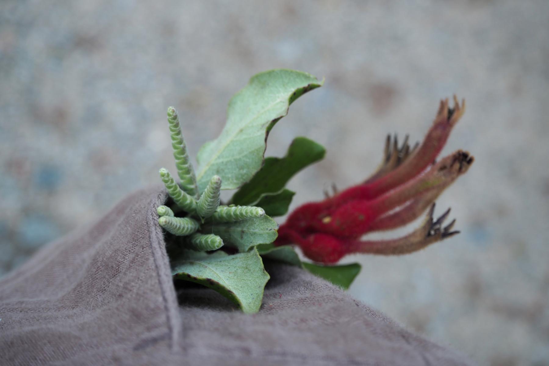Botanische Hosentasche