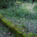 Moss on walls