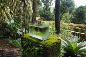 Gurukula Botanic Sanctuary. Foto: gabi schaffner